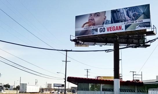 Go Vegan Billboard - Pigs